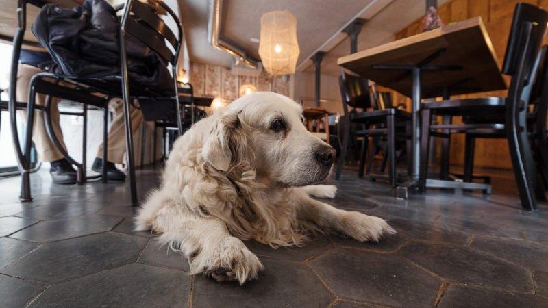 Ruta Canina por Madrid